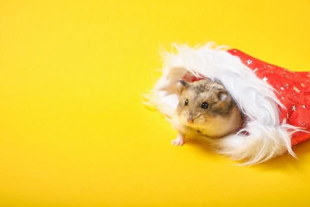 Een hamster in een rode nieuwjaarshoed op gele achtergrondkopieerruimte