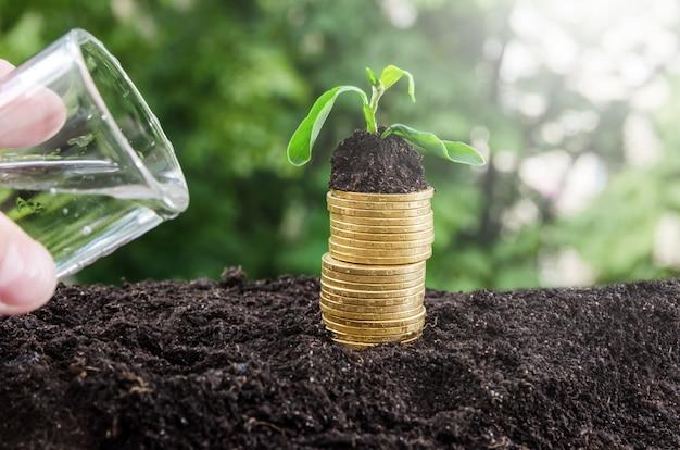 Een hand geeft een plant water op een stapel munten