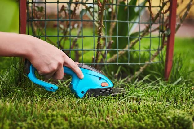Een hand houdt een grasmaaier vast en maait het gras in de buurt van een rozenstruik.
