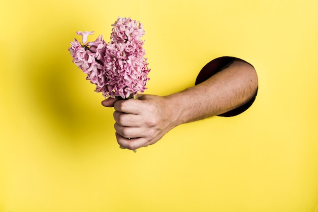Een hand uit een gat in de papieren muur houdt een hyacintbloem op een gele achtergrond.