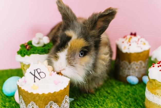 Een harig bruin klein konijn op een achtergrond van gras en een pastelroze muur