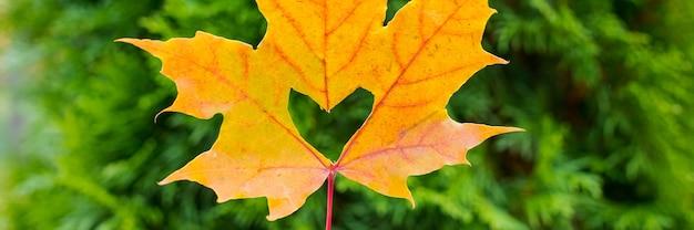 Een hart in een herfstblad op een achtergrond van gazon. herfst oranje blad met een uitgesneden hart