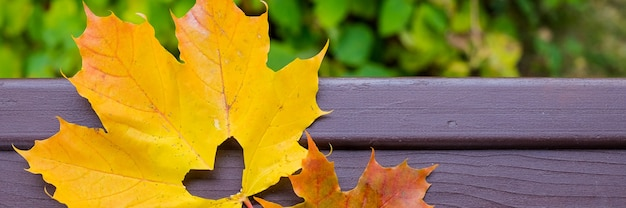 Een hart in een herfstblad. oranje herfstblad met een uitgesneden hart
