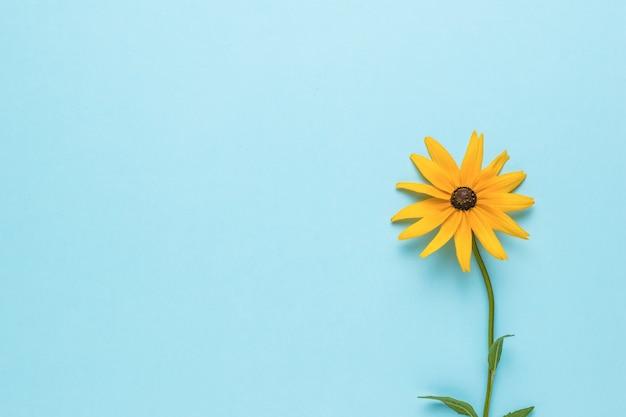 Een heldere zomer gele bloem op een blauwe achtergrond. plat leggen.