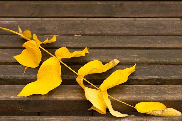 Een herfstidylle, een eenzame parkbank wacht op bezoekers.