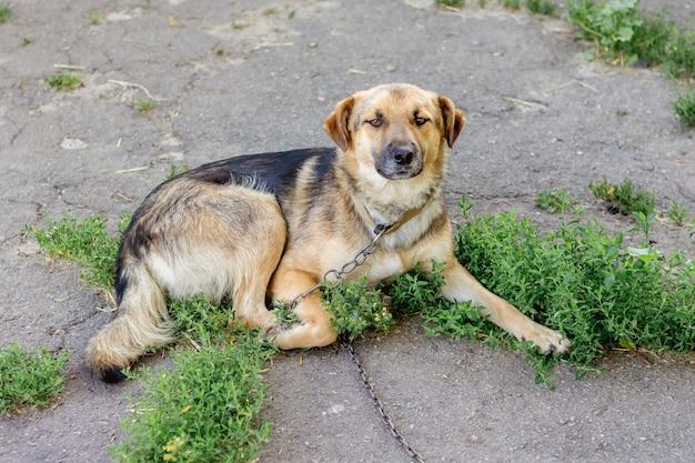 Een hond aan de ketting in de tuin van de boerderij voor de bescherming van het grondgebied
