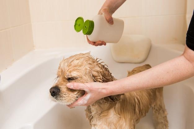 Een hond die een douche met water en zeep neemt