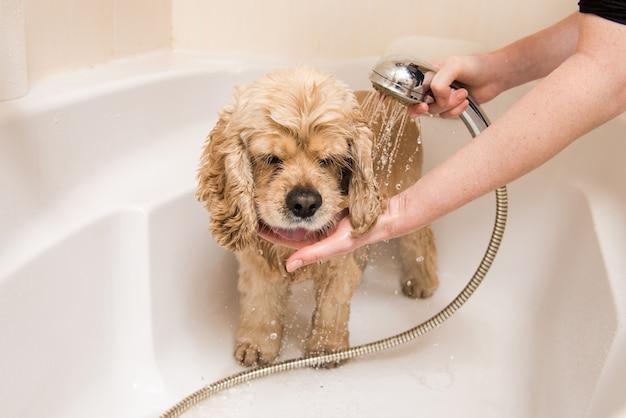 Een hond die een douche neemt