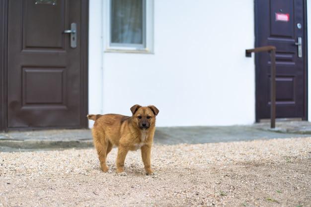 Een hond in de achtertuin van het gebouw