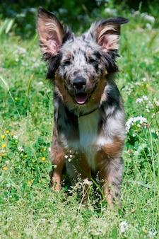 Een hond in een veld