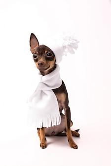 Een hond in een witte muts en sjaal zit