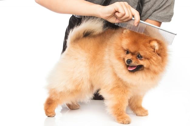 Een hond kammen