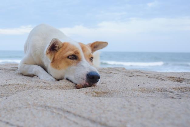 Een hond liggend op zand op het strand, met droevige ogen en natte vacht