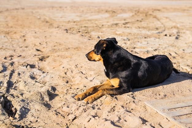 Een hond liggend op zand op het strand, met droevige ogen en natte vacht.