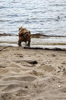 Een hond loopt langs de rivieroever