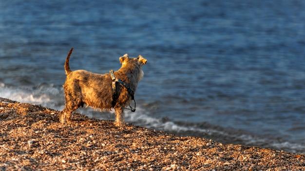 Een hond op het strand van de middellandse zee in barcelona, spanje