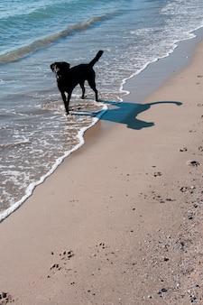 Een hond op het strand
