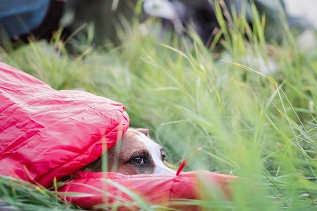 Een hond rust in een slaapzak in hoog groen gras op een camping.