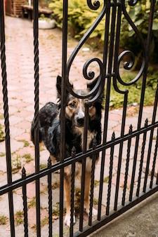 Een hond staat achter tralies en staart
