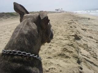 Een hond te bekijken