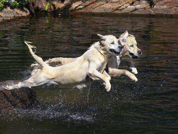 Een hond zwemt in het meer