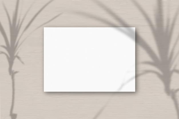Een horizontaal a4-vel wit gestructureerd papier op de roze grijze muurachtergrond. mockup-overlay met de plantschaduwen. natuurlijk licht werpt schaduwen van een exotische plant. horizontale oriëntatie.
