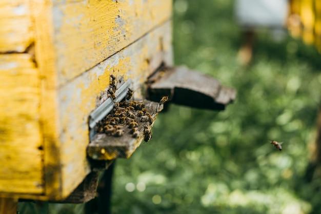 Een houten bijenkorf vol met bijen in de bijenstal