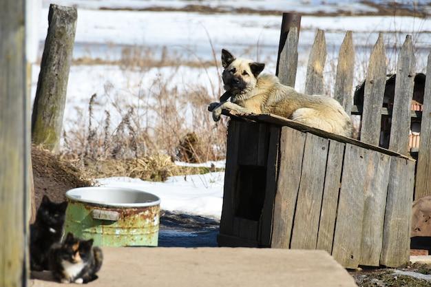 Een huishond ligt op een hondenhok in de buurt van een particulier houten huis in het dorp