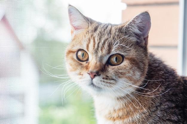 Een huiskat zit op de vensterbank en kijkt uit het raam