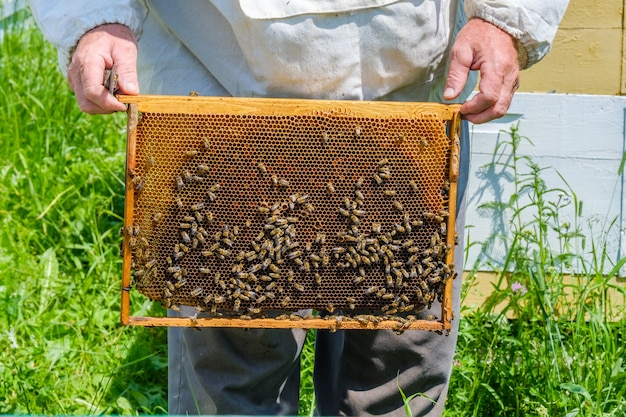 Een imker in beschermende kleding houdt een frame met honingraten vast