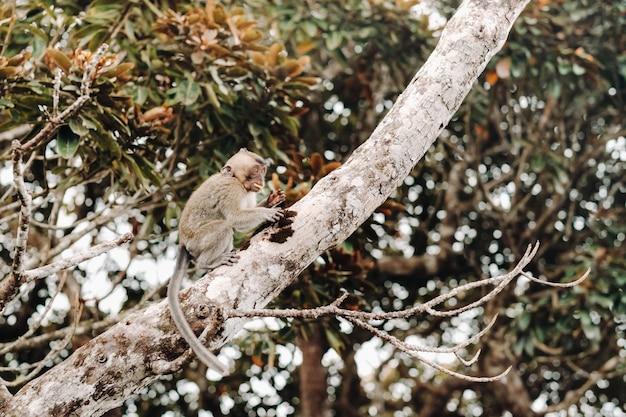 Een in het wild levende aap zit in een boom op het eiland mauritius.
