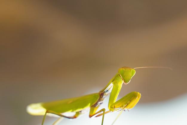 Een insect op straat.