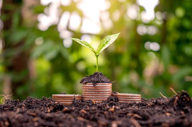 Een jong boompje dat op een stapel munten groeit, heeft een natuurlijke achtergrond. geldbesparende ideeën en economische groei