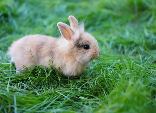 Een jong konijn zittend op groen gras