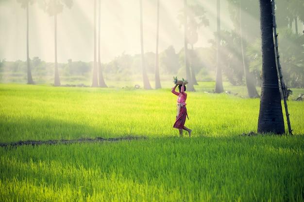 Een jong meisje in indonesische klederdracht loopt door een rijstveld door een fruitmand op zijn hoofd te zetten.