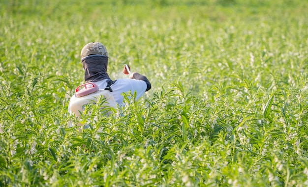 Een jonge boer die pesticiden (landbouwchemicaliën) sproeit op zijn eigen sesamveld