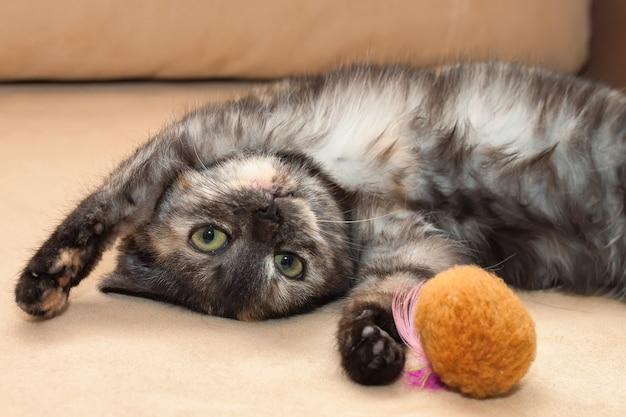 Een jonge grappige driekleurenkat ligt op de bank, speelt met speelgoed en kijkt recht in de camera