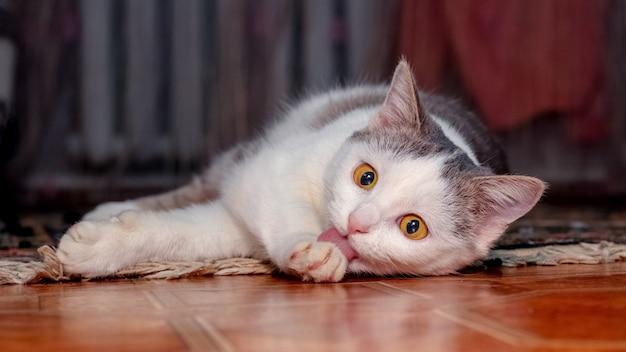 Een jonge kat ligt in een kamer op de grond