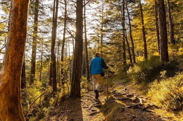 Een jonge man in een blauw jasje tijdens een trektocht door het bos op een middag bij zonsondergang. artikutza-bos in oiartzun, gipuzkoa. baskenland