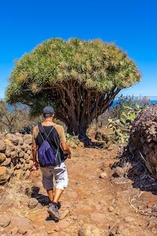 Een jonge man in een gigantische drakenboom op het las tricias-pad. garafia-stad in het noorden van het eiland la palma, canarische eilanden