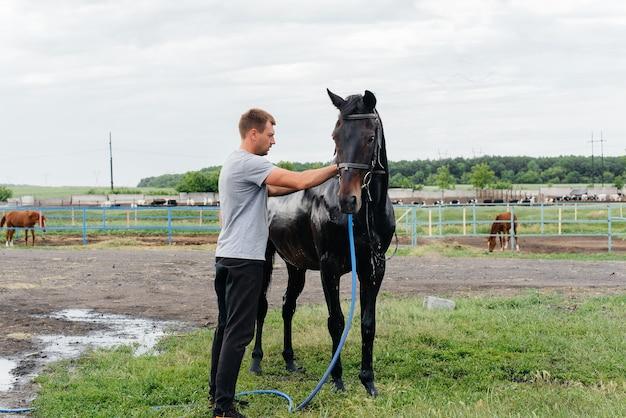 Een jonge man wast een volbloed paard met een tuinslang op een zomerse dag op de ranch. veehouderij en paardenfokkerij.