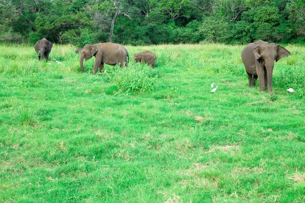 Een jonge olifant naast een volwassen exemplaar.