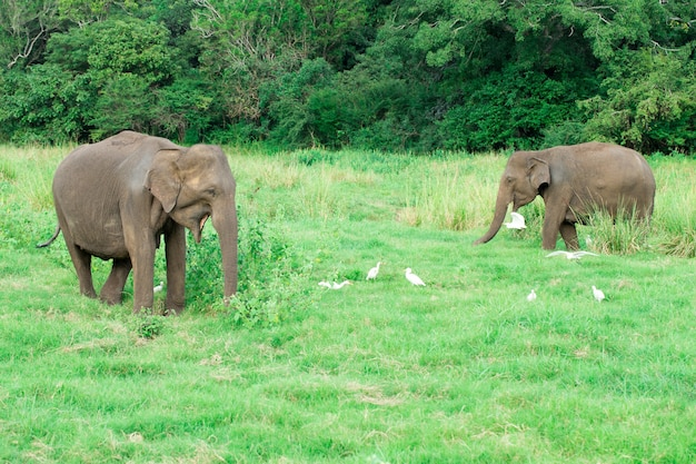 Een jonge olifant naast een volwassen olifant.