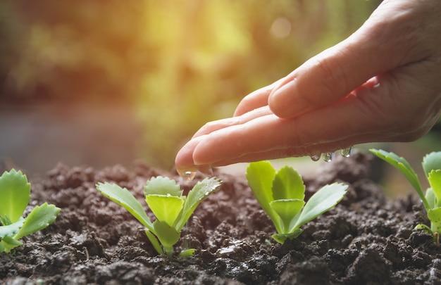 Een jonge plant uit gieter gieten. tuinieren en planten water geven.