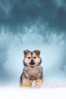 Een jonge pluizige hond in de winter tegen een donkere hemel met dramatische wolken