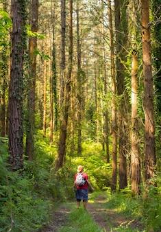 Een jonge vader met een hoed en met zijn zoon in zijn rugzak en kijkend naar de pijnbomen in het bos