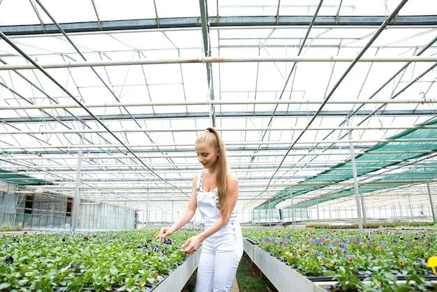 Een jonge volwassen vrouw die in een broeikaskwekerij werkt, wat bloemen plant