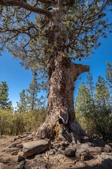 Een jonge vrouw in de boom tijdens de trektocht door het bos van de teide