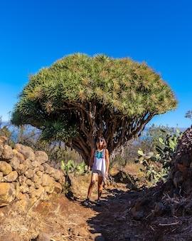 Een jonge vrouw in een gigantische drakenboom op het las tricias-pad. garafia-stad in het noorden van het eiland la palma, canarische eilanden
