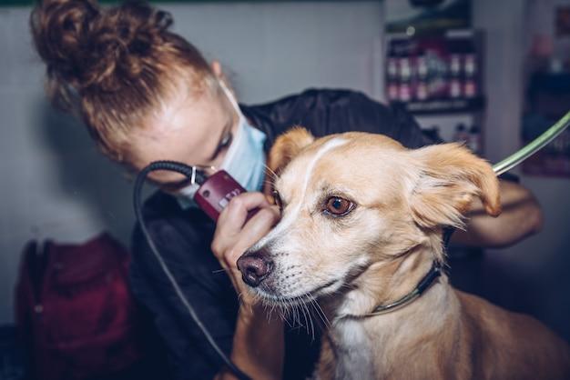 Een jonge vrouw met een masker knipt het haar van een middelgrote bruine hond